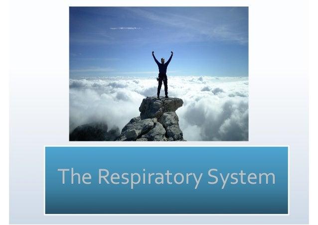 4.1 Respiratory System