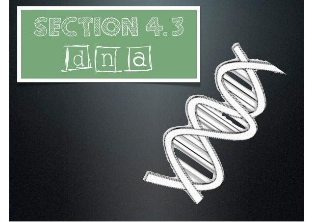 DNA (4.3)