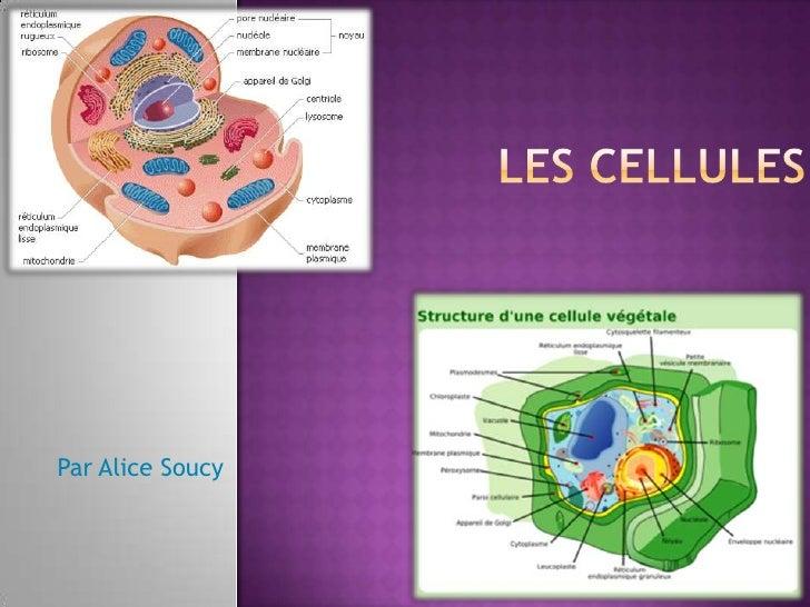 Les cellules<br />Par Alice Soucy<br />