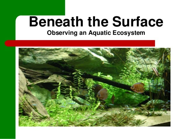 Beneath the SurfaceObserving an Aquatic Ecosystem