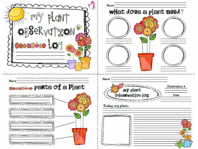 Cd Plant Growimg Activity For Kids