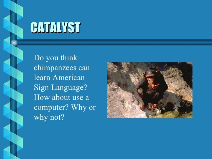 CATALYST Do you think chimpanzees can learn American Sign Language? How about use a computer? Why or why not?