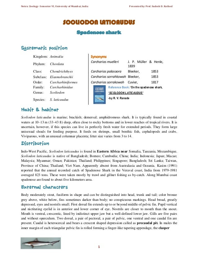 Notes: Zoology- Semester VI, University of Mumbai, India  Presented by Prof. Sudesh D. Rathod  SCOLIODON LATICAUDUS Spaden...