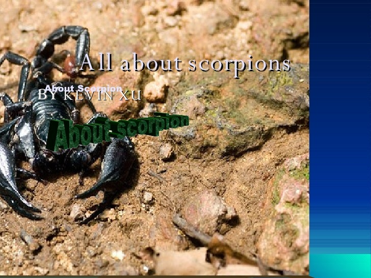 All about scorpions BY  KEVIN XU About Scorpion About scorpion