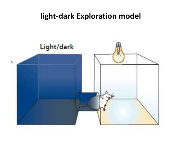 light dark box test 2
