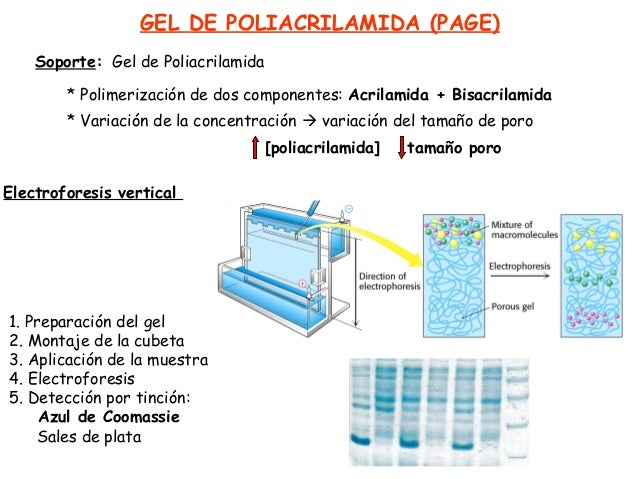 Sds- Page Relat... Sds Page Recipe