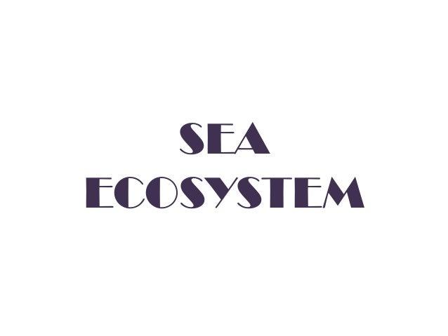 SEA ECOSYSTEM