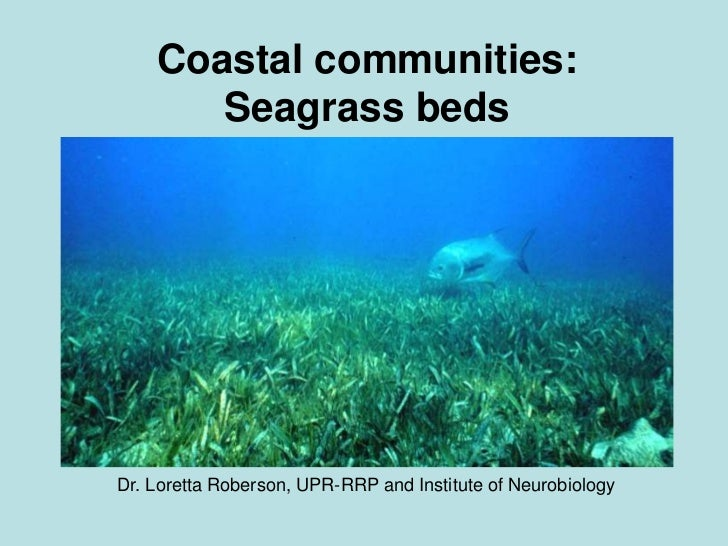 Coastal communities: Seagrass beds <br />Dr. Loretta Roberson, UPR-RRP and Institute of Neurobiology<br />