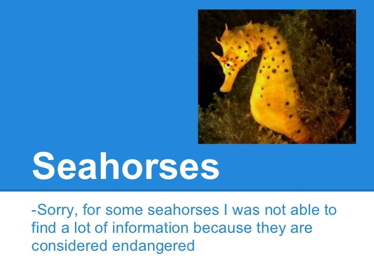 Seahorses-Sorry, for some seahorses I was not able tofind a lot of information because they areconsidered endangered