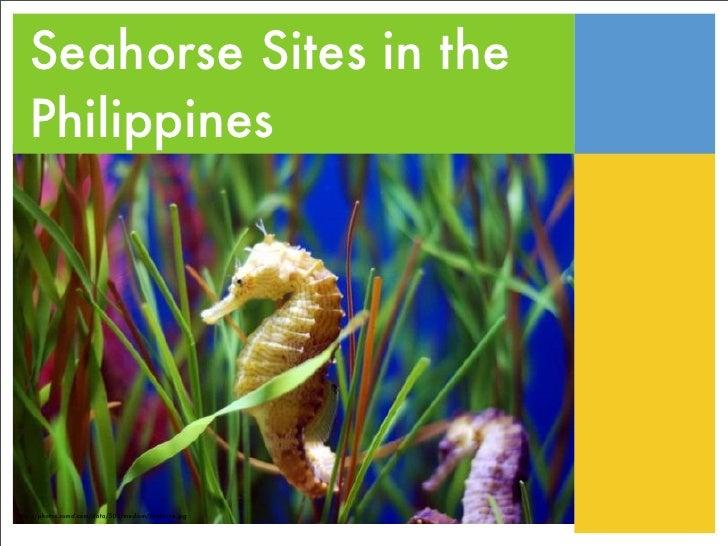 Seahorse Sites in the    Philippines     http://photos.somd.com/data/500/medium/seahorse.jpg