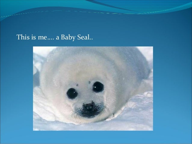 This is me.... a Baby Seal..