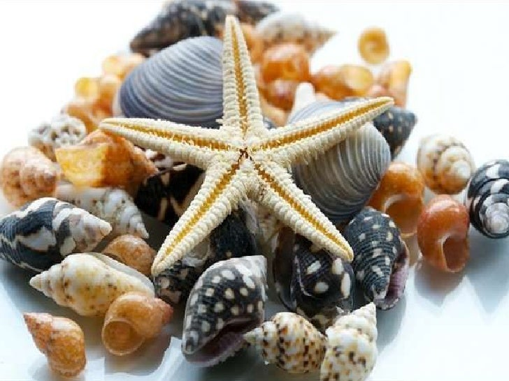 Sea Shell Pictures - Summer Dreams