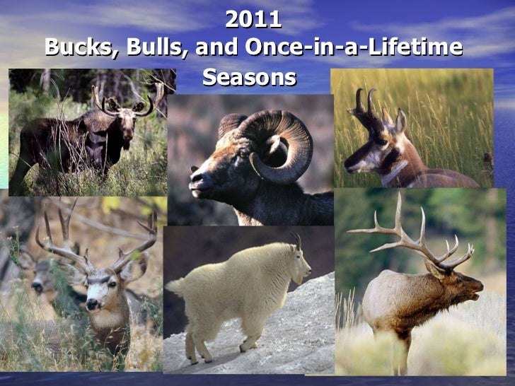 2011 Bucks, Bulls, and Once-in-a-Lifetime Seasons