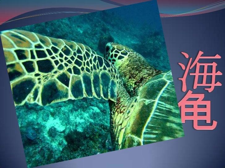 海龟<br />