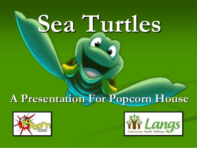 Sea TurtlesA Presentation For Popcorn House