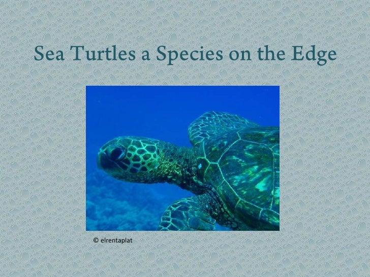 Sea Turtles a Species on the Edge<br />© elrentaplat<br />