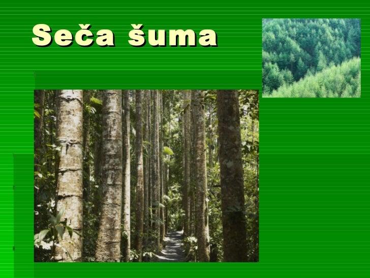 Seča šuma   grčić, vanovac i mali