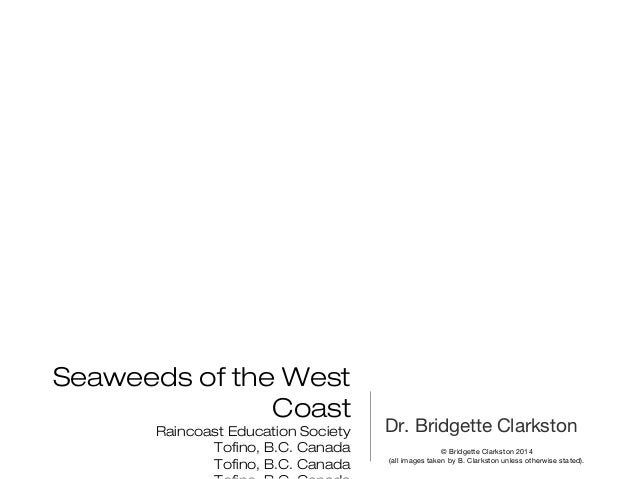 Seaweeds of the West Coast Raincoast Education Society Tofino, B.C. Canada Tofino, B.C. Canada Dr. Bridgette Clarkston © B...