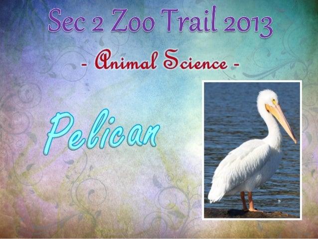 Sec 2 Zoo Trail 2013