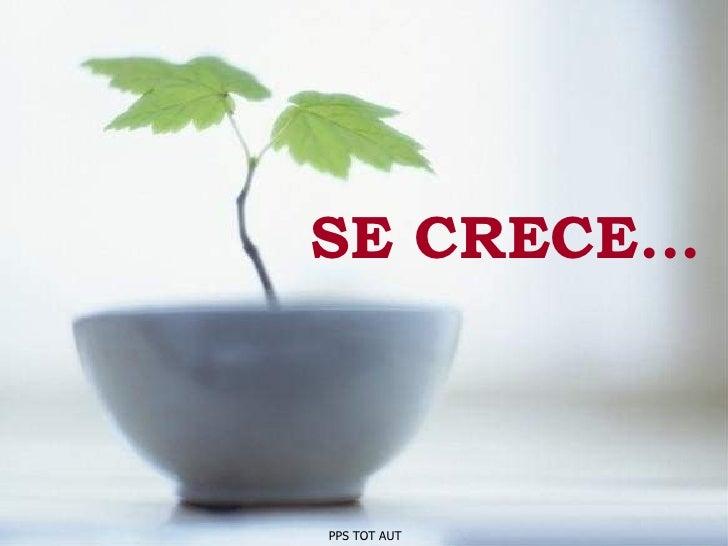 SE CRECE... PPS TOT AUT