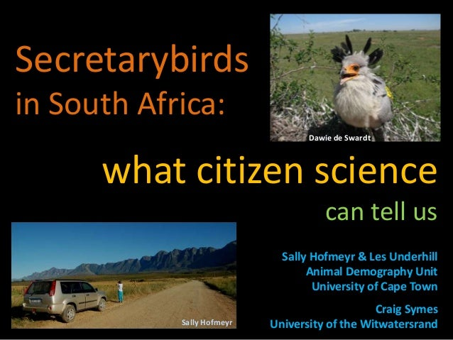 Secretarybirds in South Africa: what citizen science can tell us Sally Hofmeyr & Les Underhill Animal Demography Unit Univ...