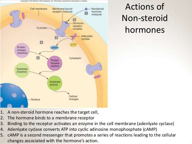 nonsteroid hormones are derived from quizlet