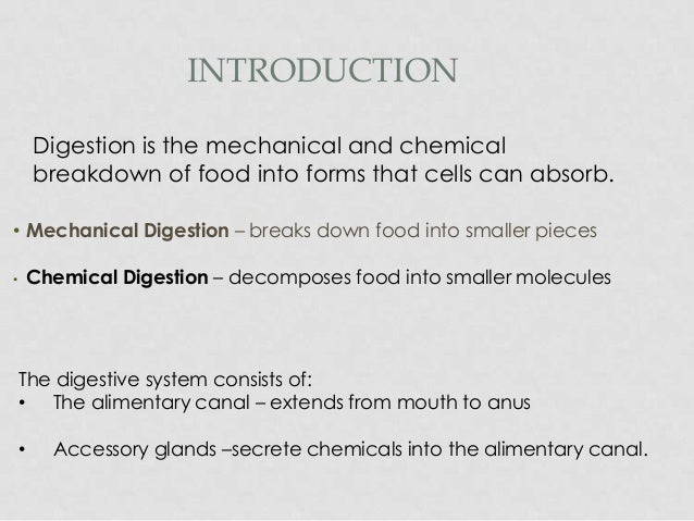 What is a great intro sentence about the topic of the digestive system?
