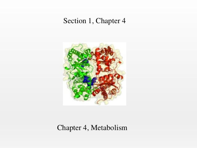 Section 1, Chapter 4  Chapter 4, Metabolism
