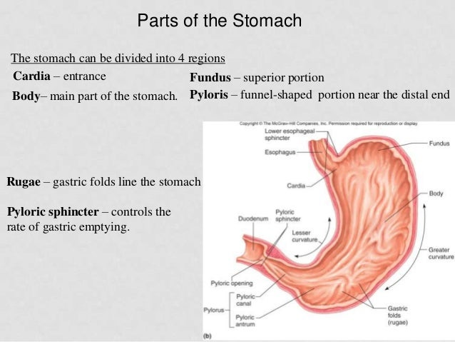 Right Left and Central Abdominal Pain  Health Fixit