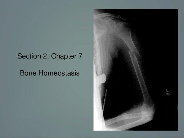 section 2, chapter 7: skeletal system