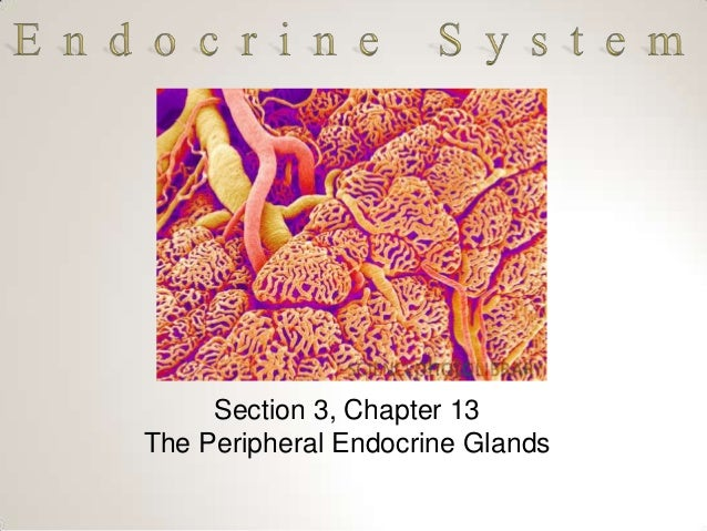 Section 3, Chapter 13 The Peripheral Endocrine Glands