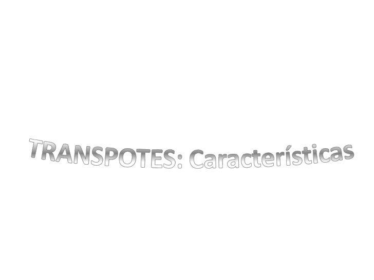 Sector Servicios. Transportes