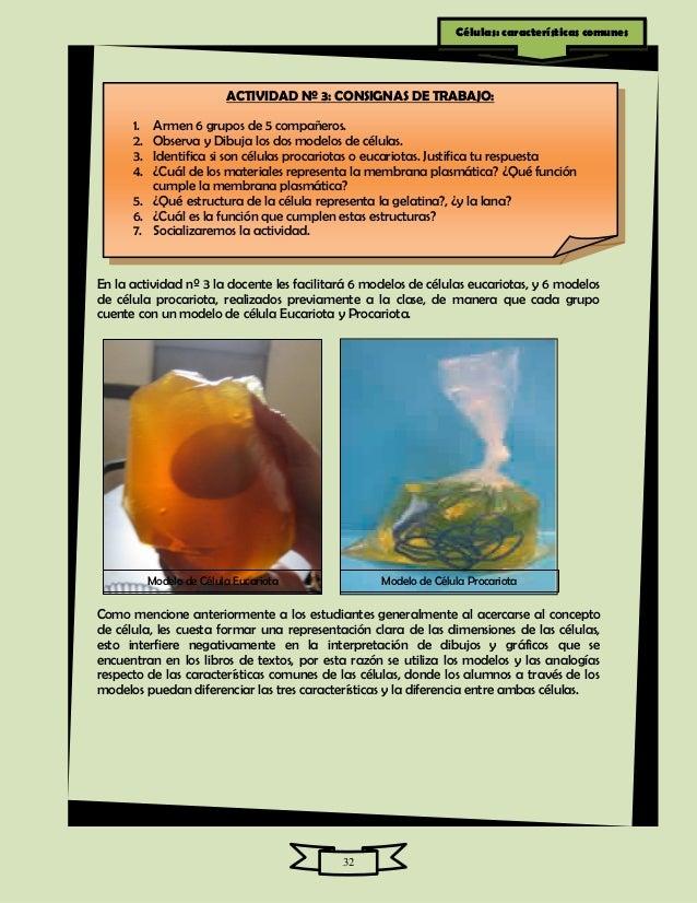 Estructurayfuncioncelularbacteriana - Estructura