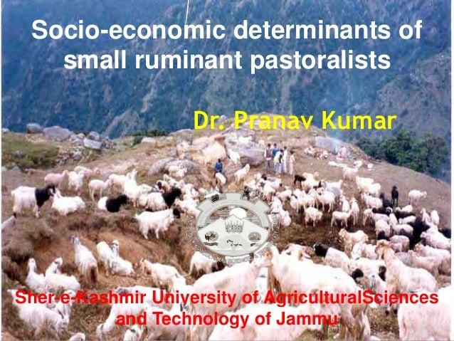 Socio-economic determinants ofsmall ruminant pastoralistsDr. Pranav KumarSher-e-Kashmir University of AgriculturalSciences...