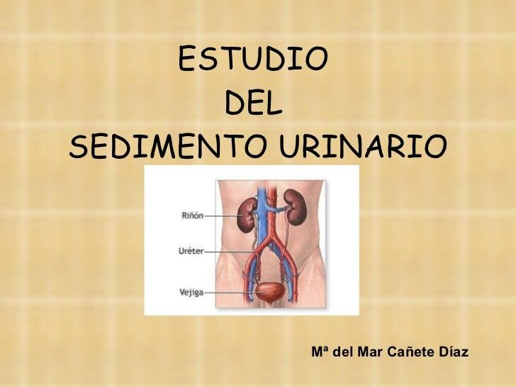 ESTUDIO  DEL  SEDIMENTO URINARIO Mª del Mar Cañete Díaz
