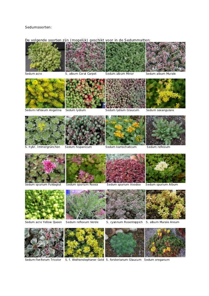 Sedumsoorten:De volgende soorten zijn (mogelijk) geschikt voor in de Sedummatten:Sedum acre                  S. album Cora...