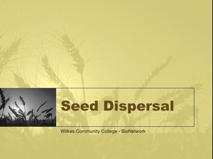 Seed Dispersal Wilkes Community College - BioNetwork