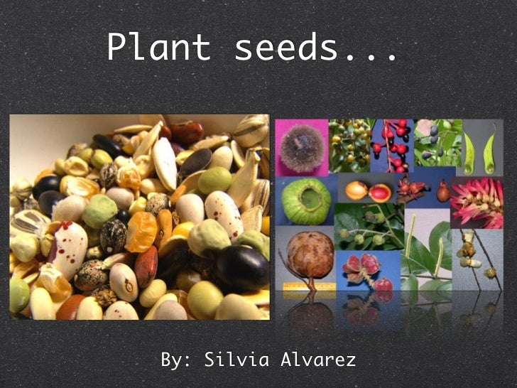 Plant Keynote Project CF