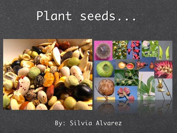 Plant seeds...       By: Silvia Alvarez