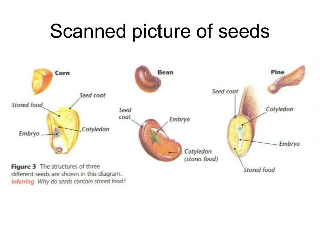 Where Is Plant Food Stored