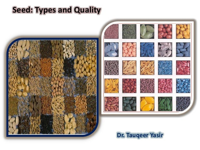 Seed: Types and Quality  Dr. Tauqeer Yasir