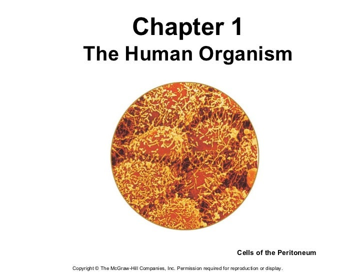 Copyright  ©  The McGraw-Hill Companies, Inc. Permission required for reproduction or display. Chapter 1 The Human Organis...