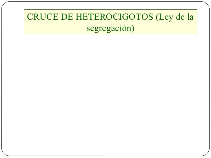CRUCE DE HETEROCIGOTOS (Ley de la segregación)