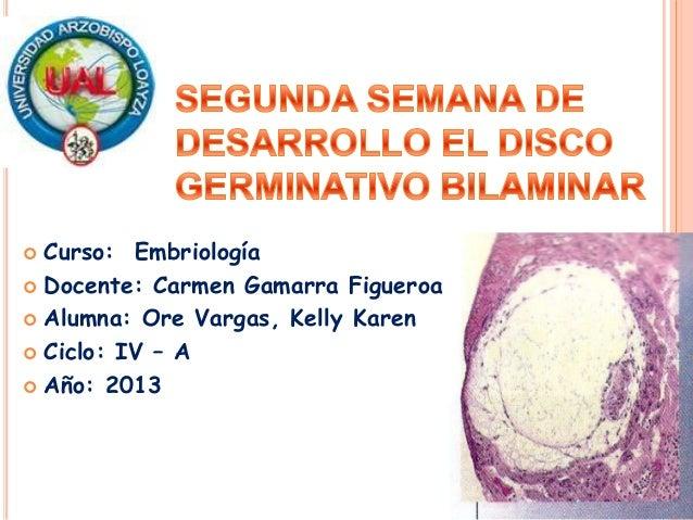 Segunda semana de desarrollo el disco germinativo bilaminar
