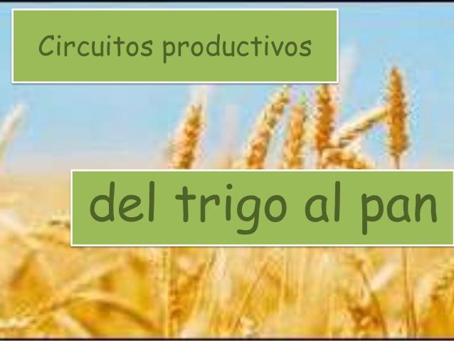Circuito Productivo Del Trigo : Segundo circuitos productivos