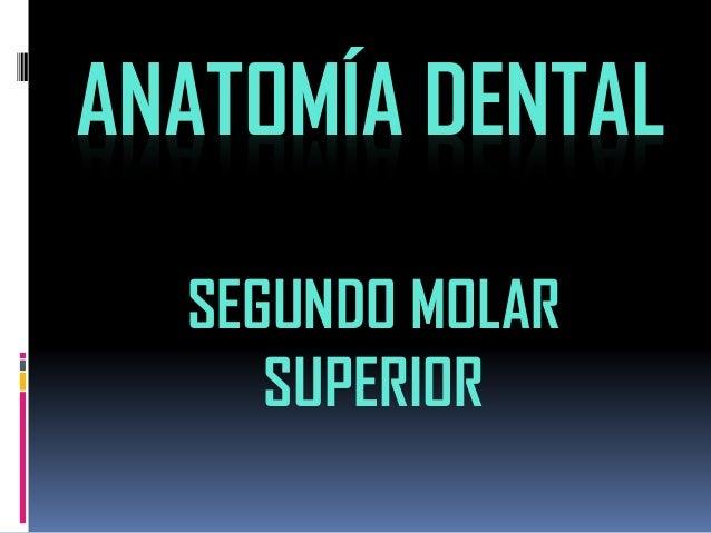 ANATOMÍA DENTAL  SEGUNDO MOLAR SUPERIOR