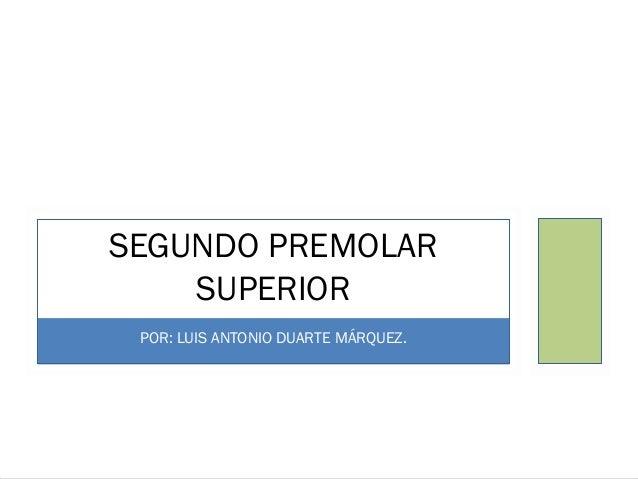 SEGUNDO PREMOLAR SUPERIOR POR: LUIS ANTONIO DUARTE MÁRQUEZ.