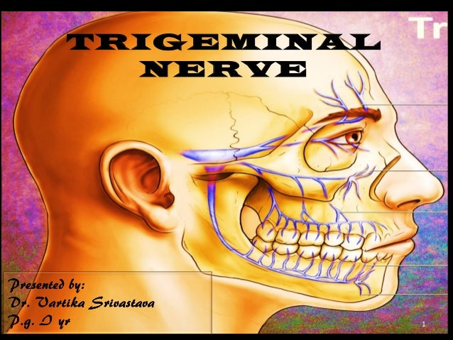 TRIGEMINAL NERVE  1