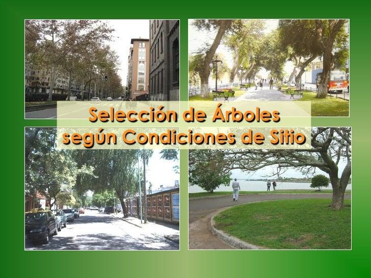 Selección de Árbolessegún Condiciones de Sitio