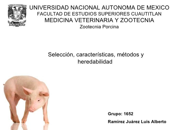Zootecnia Porcina Selección, características, métodos y heredabilidad  Grupo: 1652 Ramírez Juárez Luis Alberto UNIVERSIDAD...